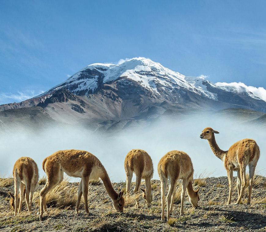 Atacama Reizen Ecuador60