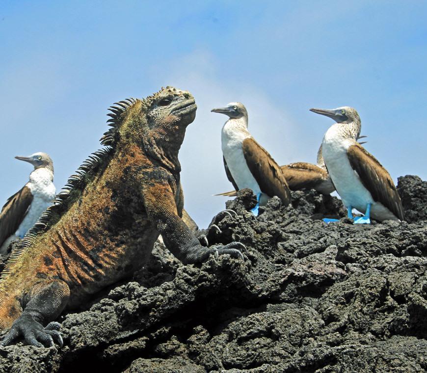 Darwins Voyage4 Ecuador Rondreis Vakantie Specialist