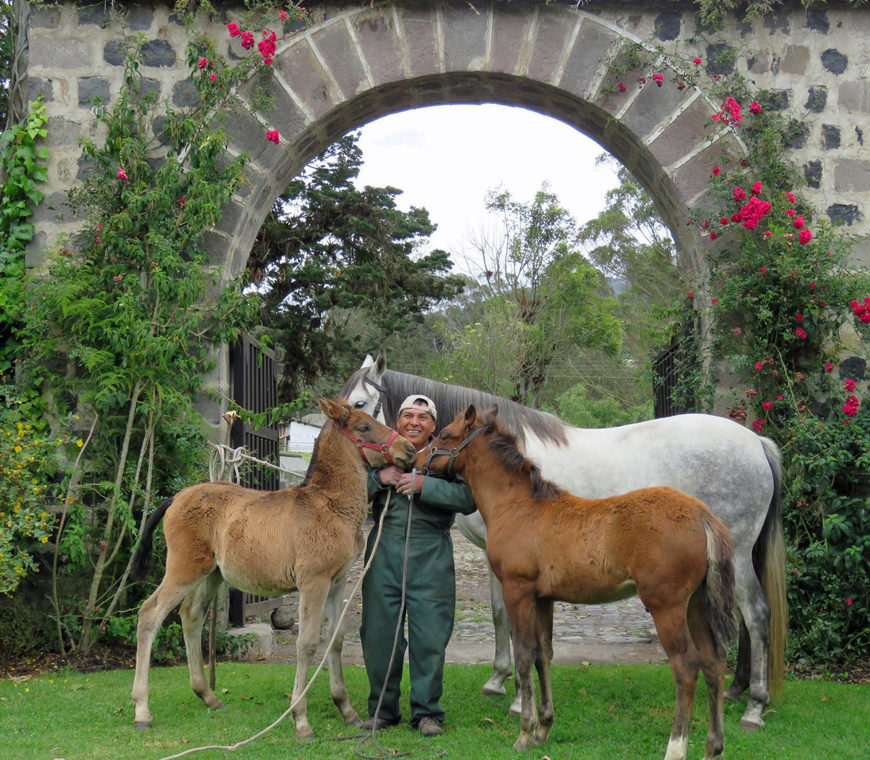 Hacienda Zuleta Ecuador Luxereis Atacama Be
