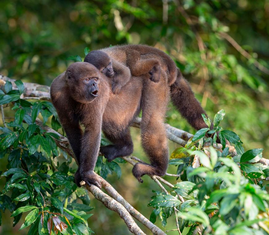Ecuador Reizen Amazone Yasuni Lodge8