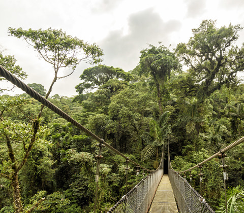 Ecuador Regenwoud Rainforest Explorer Reizen Atacama