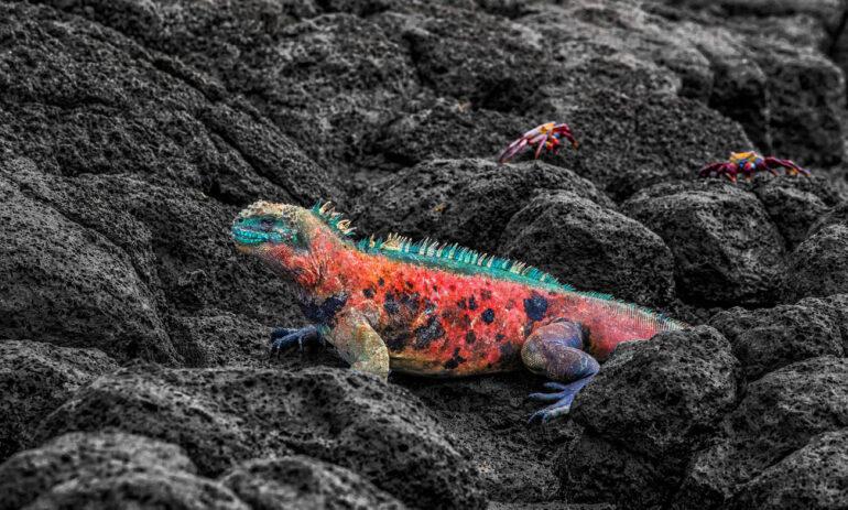 Reizen Naar Galapagos Ecuador Atacama4