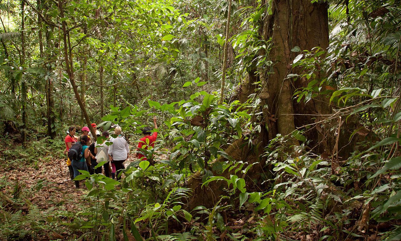Ecuador Reizen Amazone Yasuni Lodge11