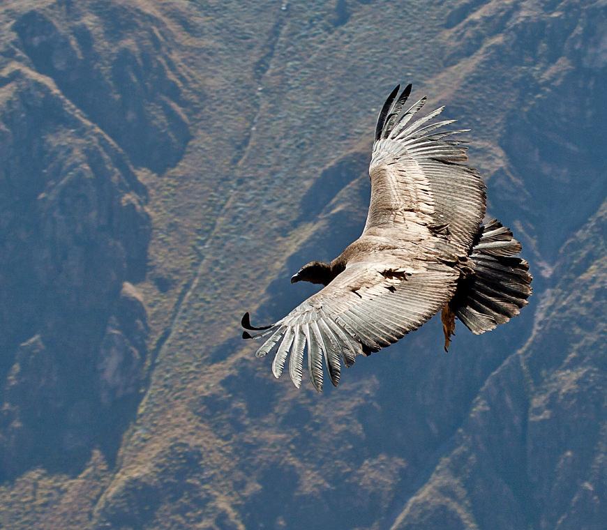 Atacama Peru Reizen Condor