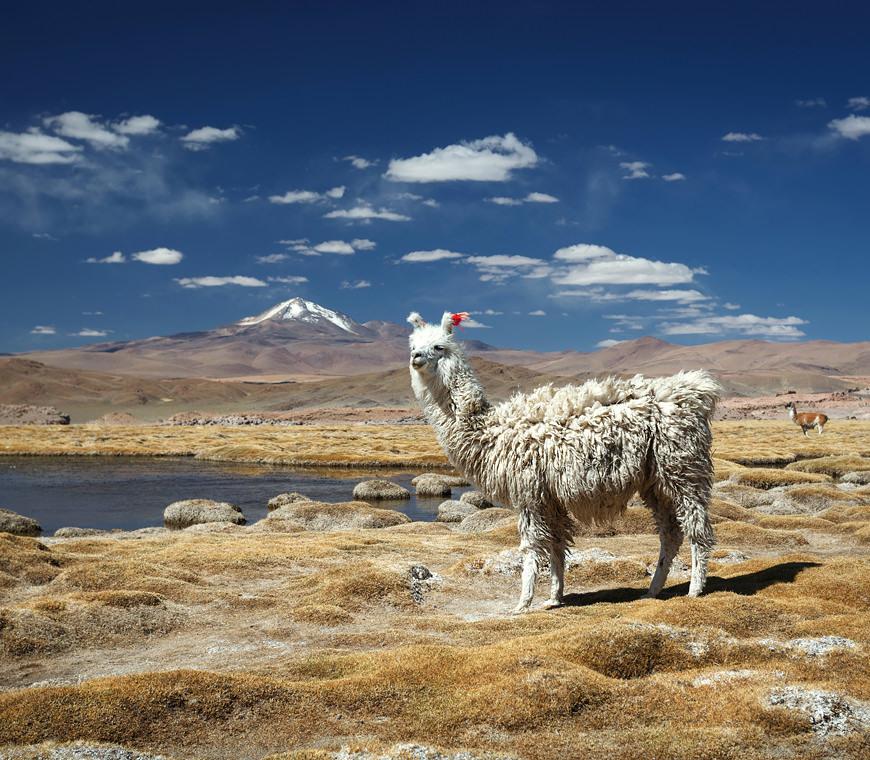 10 Bolivia Profundo Rondreis Atacama