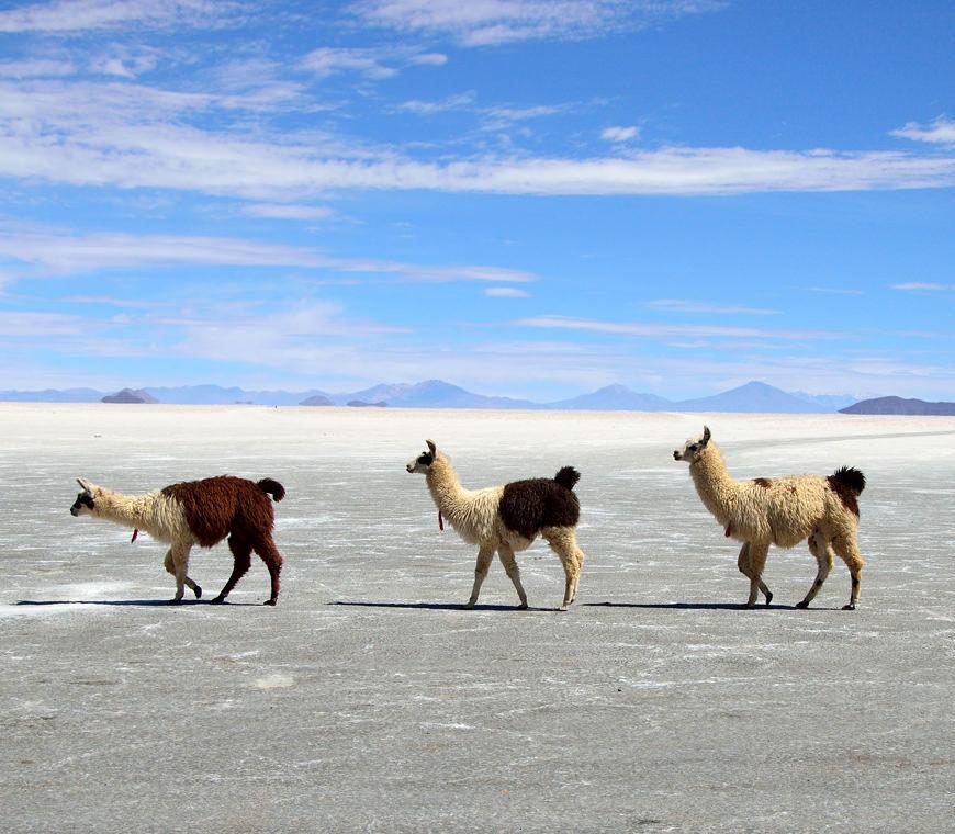 Atacama Bolivie Reizen Uyuni © Helen De Meyer