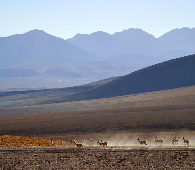 Atacama Bolivie Reizen Uyuni10 © Helen De Meyer