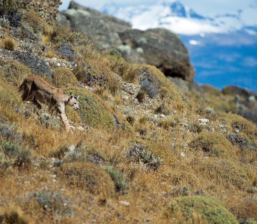 Chili14 Poema Torres Del Paine Winter Atacama Be