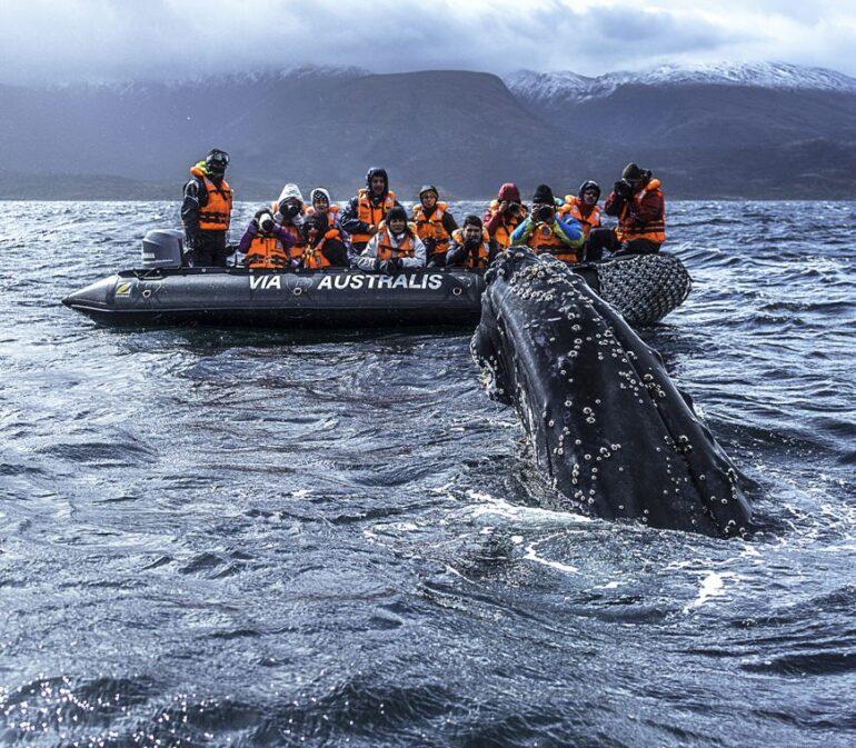 Patagonie Reizen Cruise Vuurland3