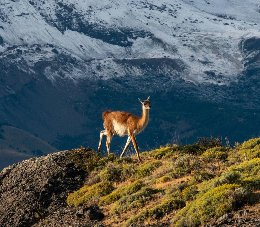 Chili Atacama2 Patagonie Torres Del Paine Reis