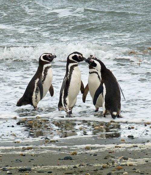 Chile Bucket Wildlife Vuurland