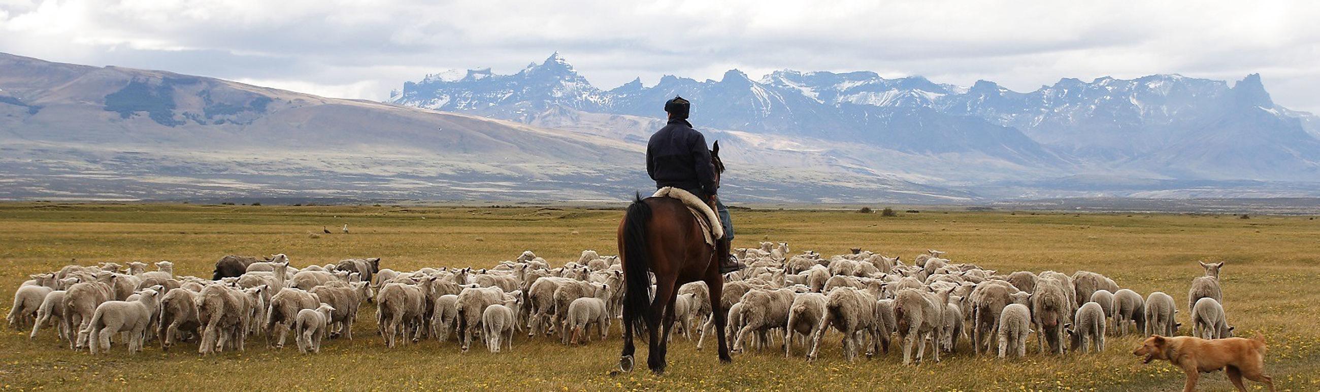 Awasi Patagonia Chili Luxe Reizen5