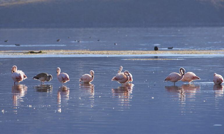Chili Reizen Atacama Woestijn Flamingos