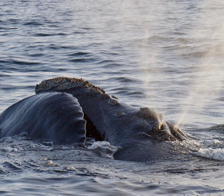 Argentinie Reis Whalewatching