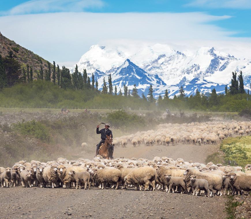 Patagonie Argentinie Reizen38