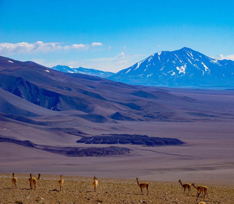 Argentina Puna Vierkant7 Atacama Be