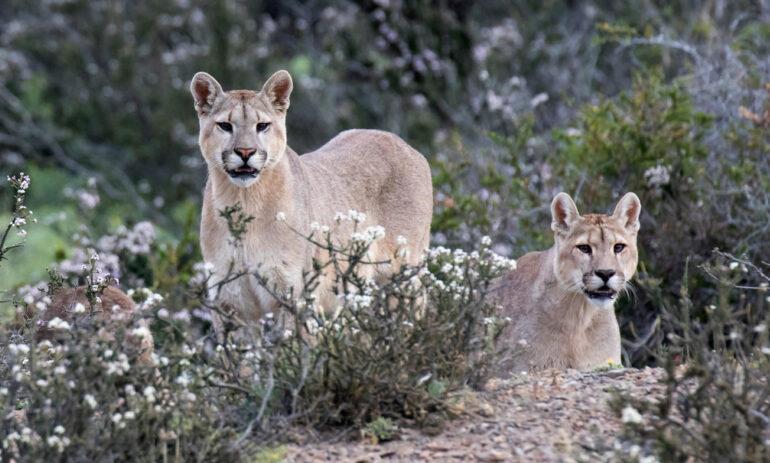 Atacama Be Tdp Puma Mirador Condor Lakes Glaciars