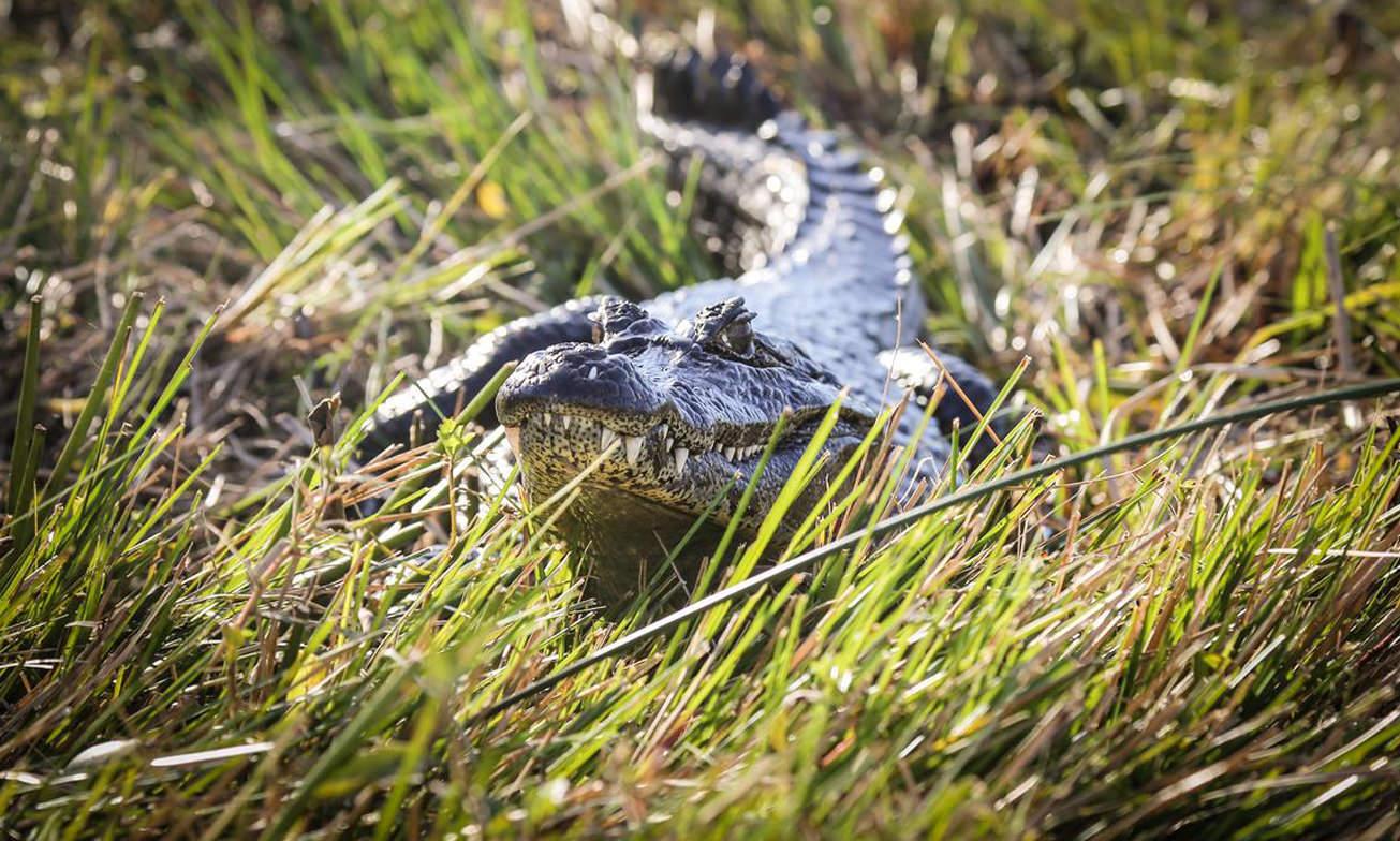 Esteros Ibera Wetlands Atacama2 Argentinie Reisspecialist